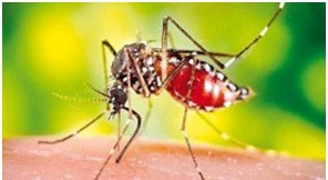 малярияй2